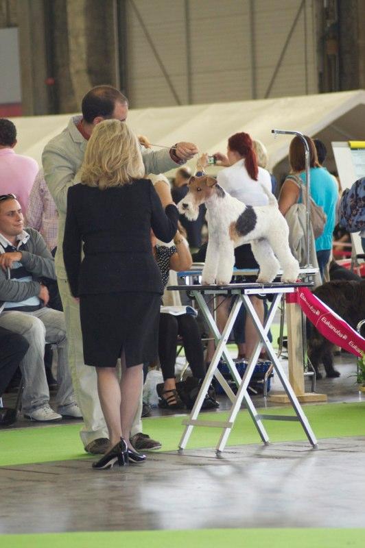 World Dog Show – París 2011