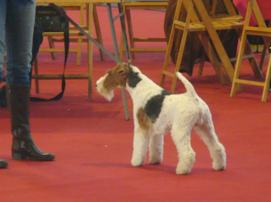 Exp. Int. Martorell 2010