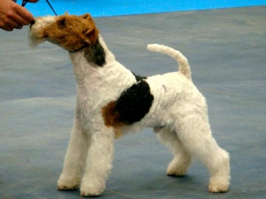 Exp. Nacional canina Vic 2010