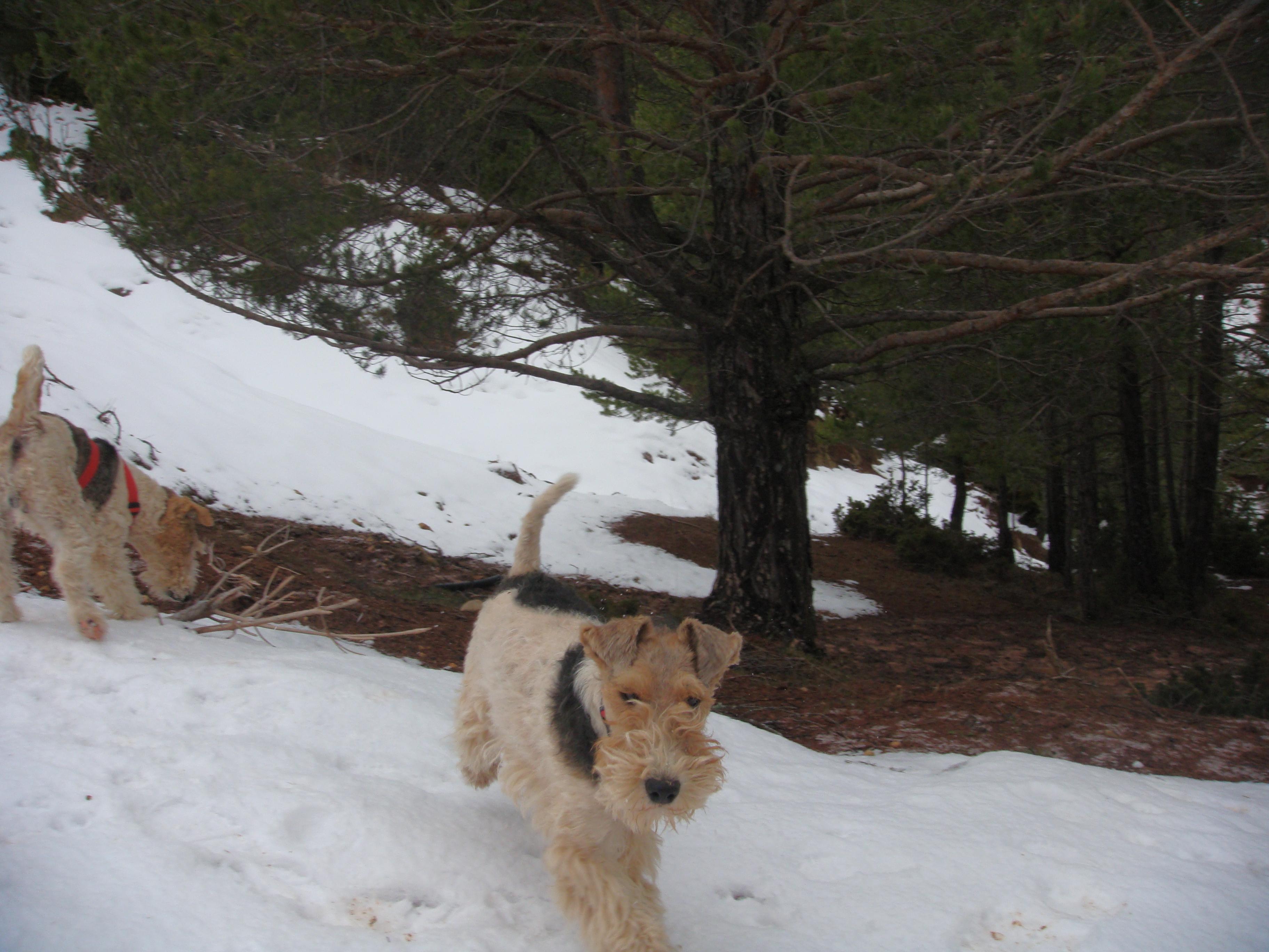 Bart disfrutando de la nieve