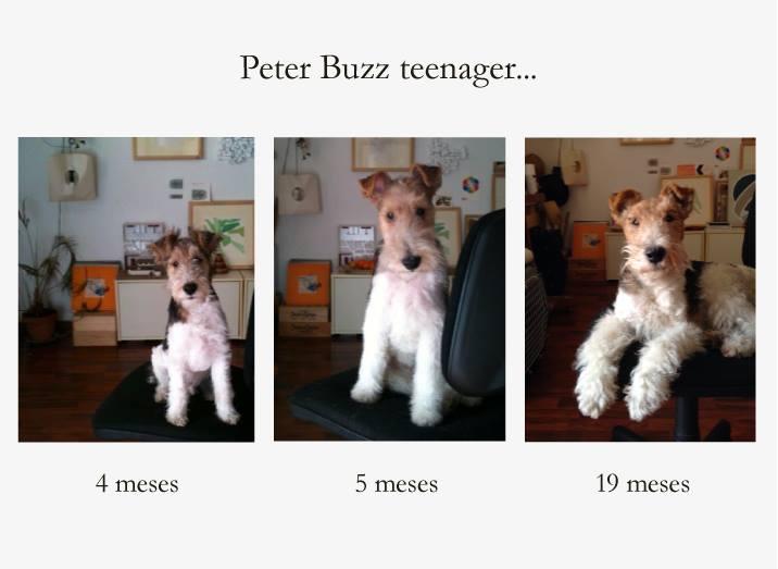 Petter Buzz
